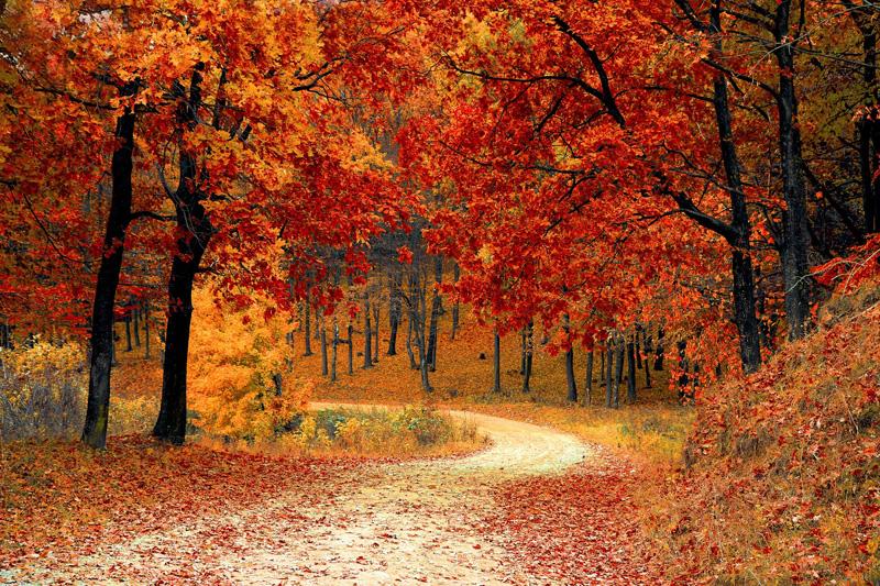 Hardlopen en afvallen - natuurlijke omgeving