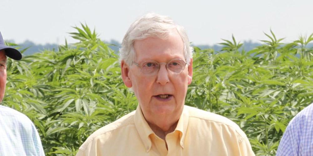 Mitch McConnell Cannabis