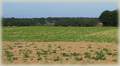 Dedeelgaarderberg