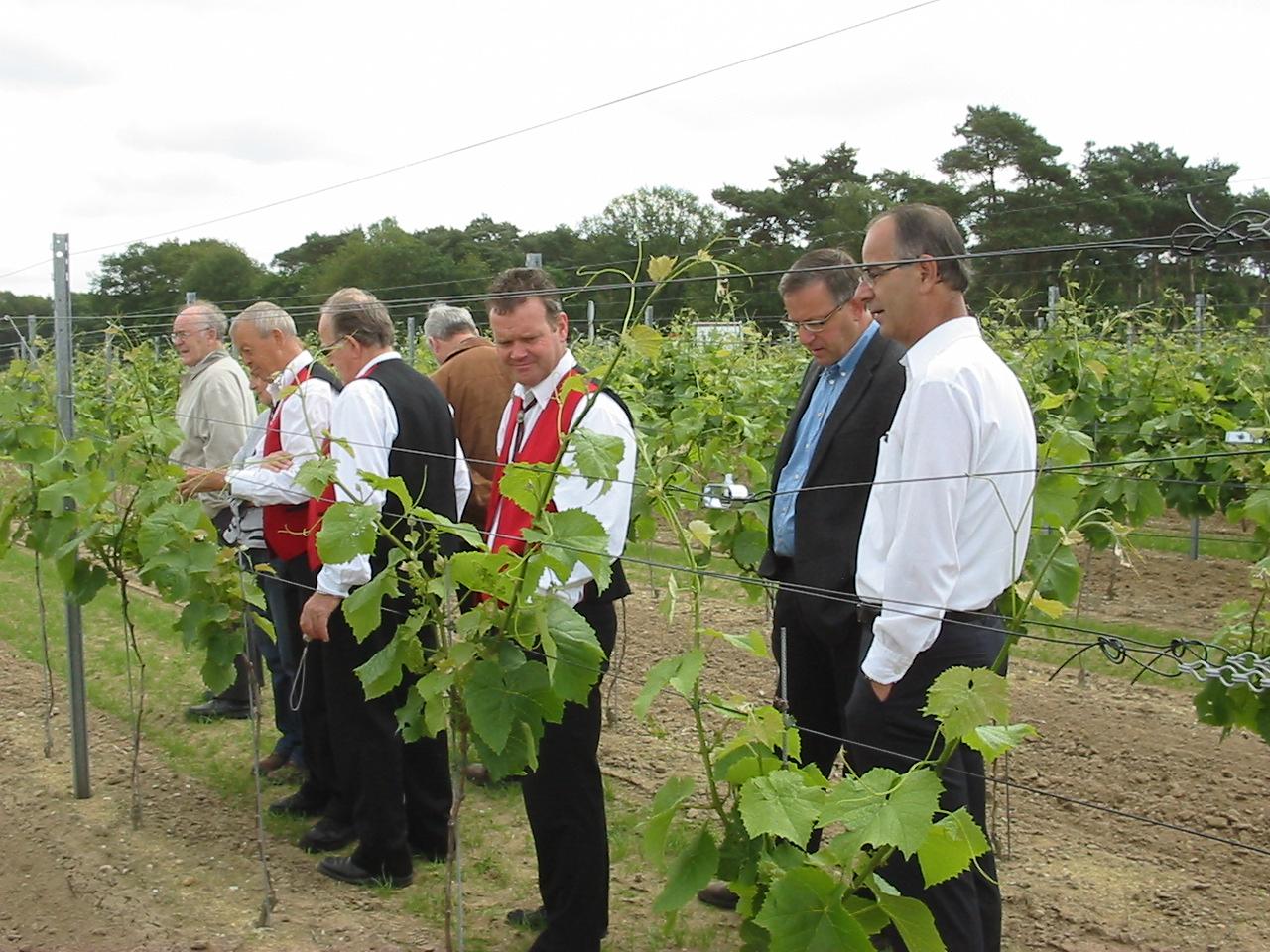 Opening van de wijngaard_foto9