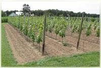 Excursie in de wijngaard-foto1